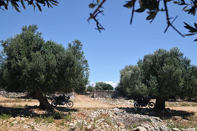 Parken am Olivenhain